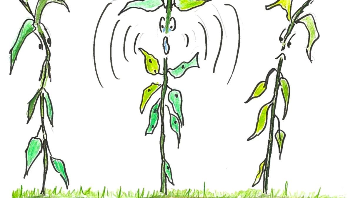 Plant Rant Radio on Anchor