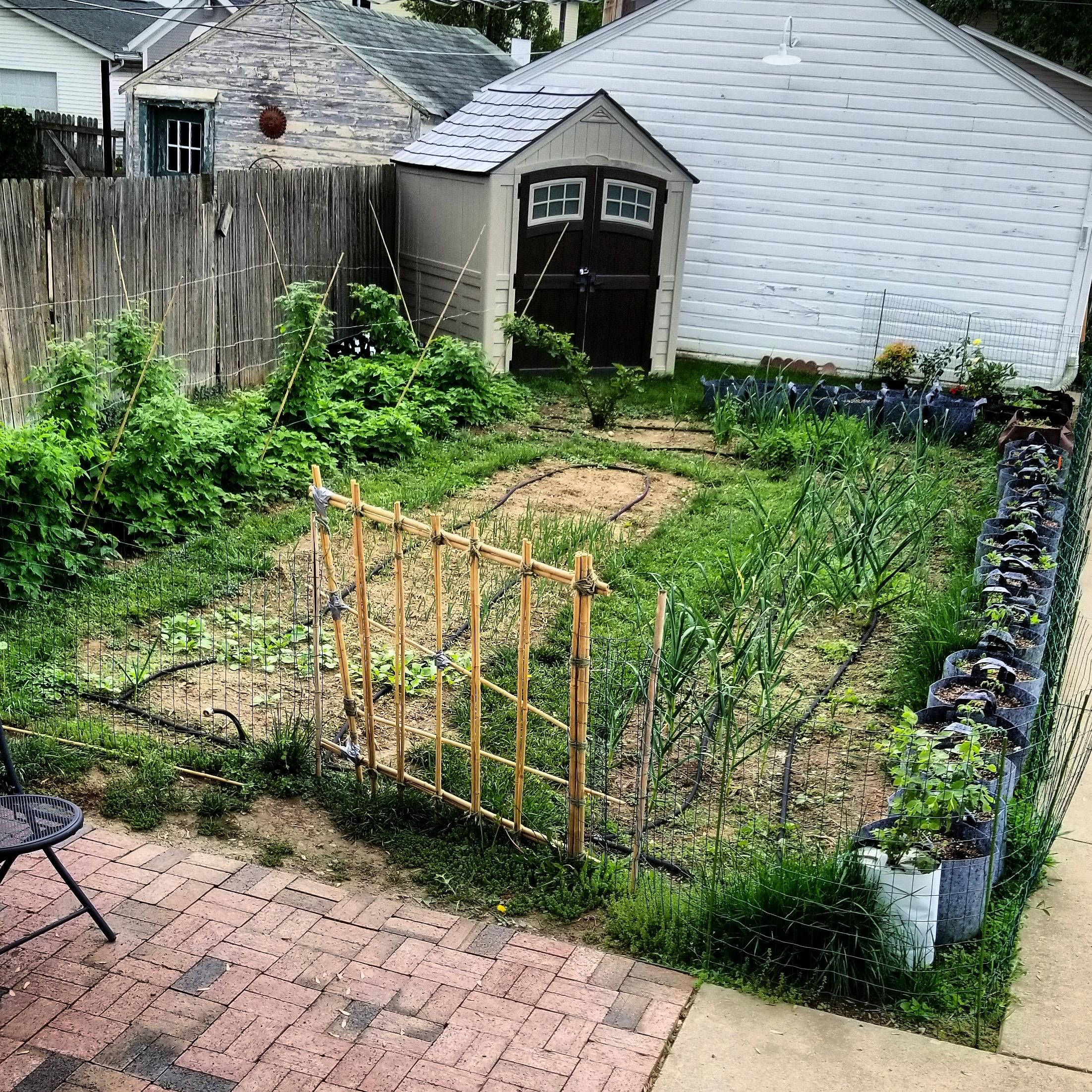 How & Why I Began Gardening