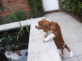 Puppies are fascinated by ponds