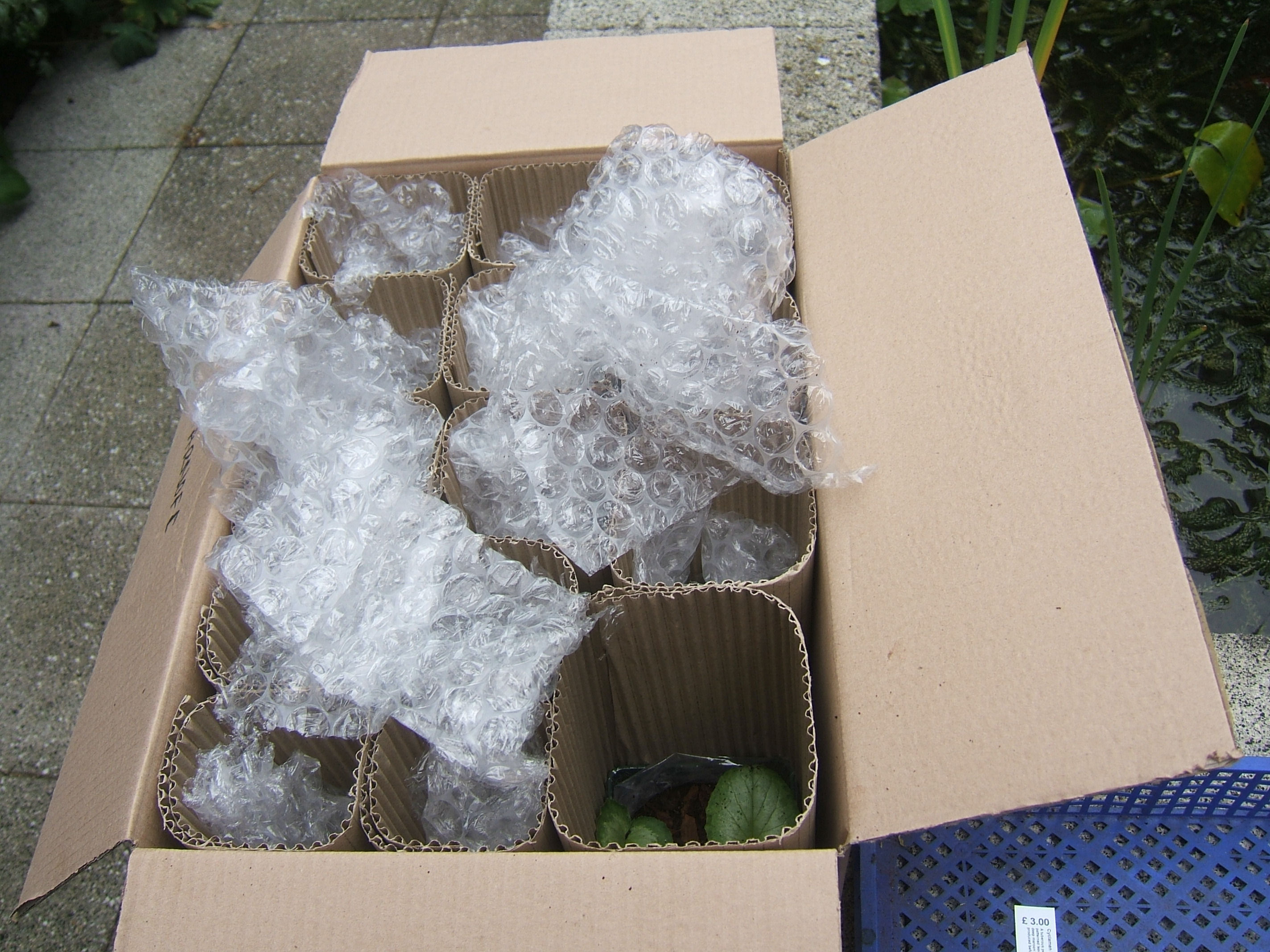 Great example of packaging from a specialist nursery