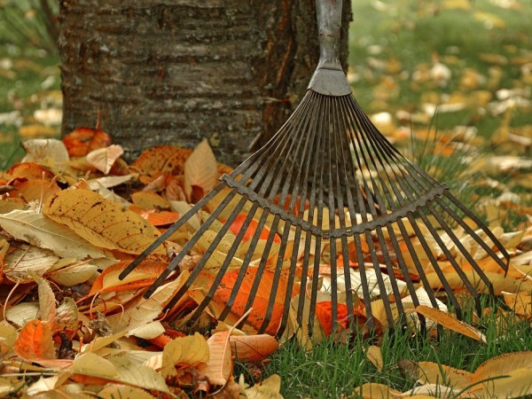 HOW TO TAKE CARE OF YOUR GARDEN IN THE AUTUMN SEASON