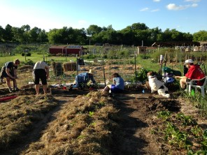 "Hannah, Cory, Marge, ""Marcus"", Bird, and Andy work together building a trellis and planting tomatos"