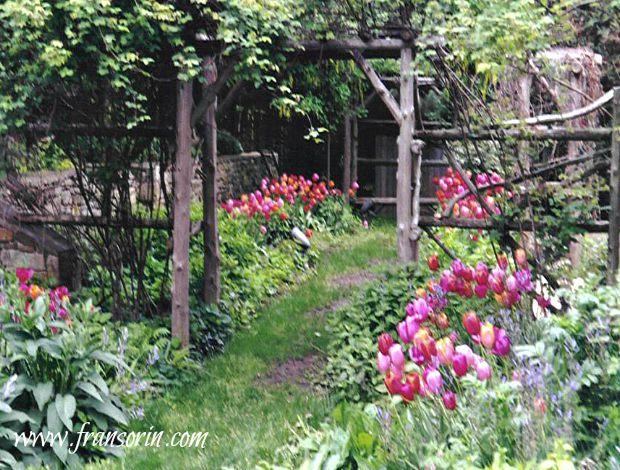 2004-02-16 17.46.40.jpg- PIMB-3- tulips in cutting garden -early spring