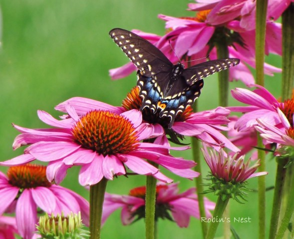 Submission to Gardening Gone Wild Picture This photo contest Oct 2015