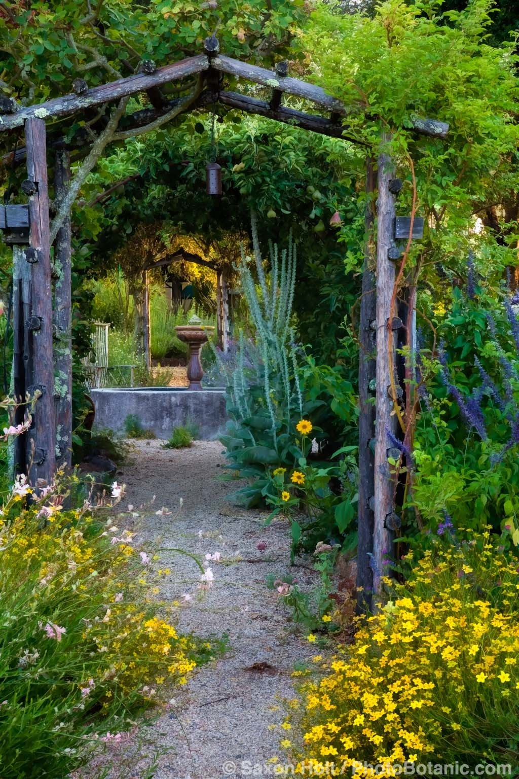 Path to the fountain in California country garden.
