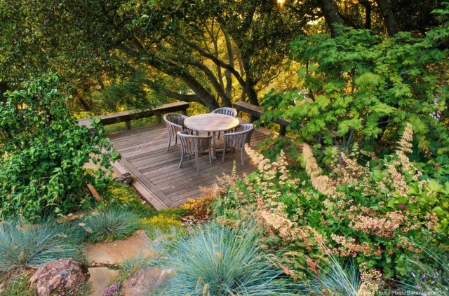 Deck garden room under California live oaks (Quercus agrifolia) in afternoon light
