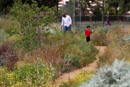 Family walking through pollinator garden of flowering California wildflowers at Los Angeles Natural History Museum