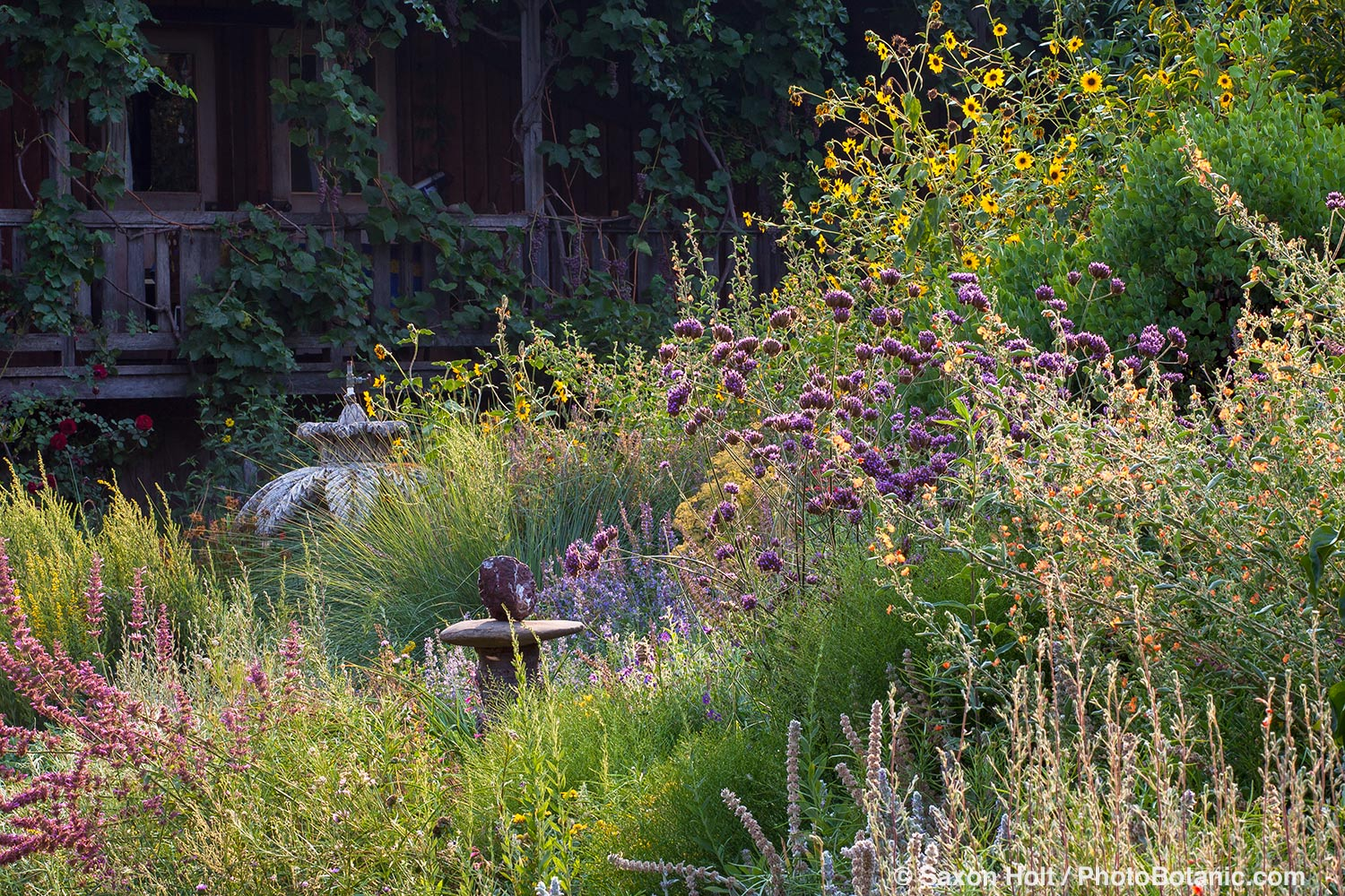 Perennial border with pollinator plants - Frey Garden