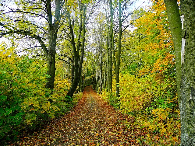 road-21205_640-forest-photo-2