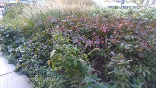 1479198078279-dilworth-park-perennial-plantings