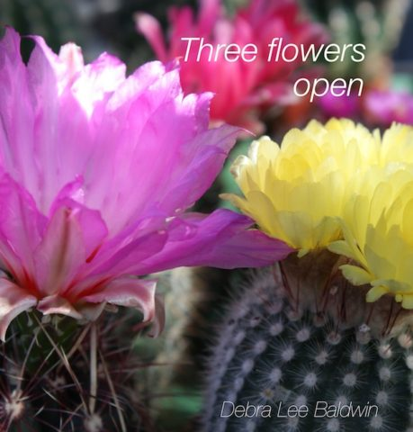 3-flowers-opened_a_2_r