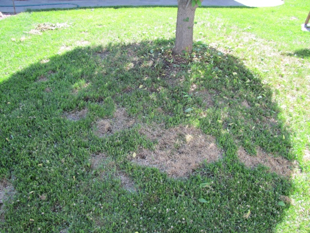 Product Review: LawnLift Grass Paint (5/6)