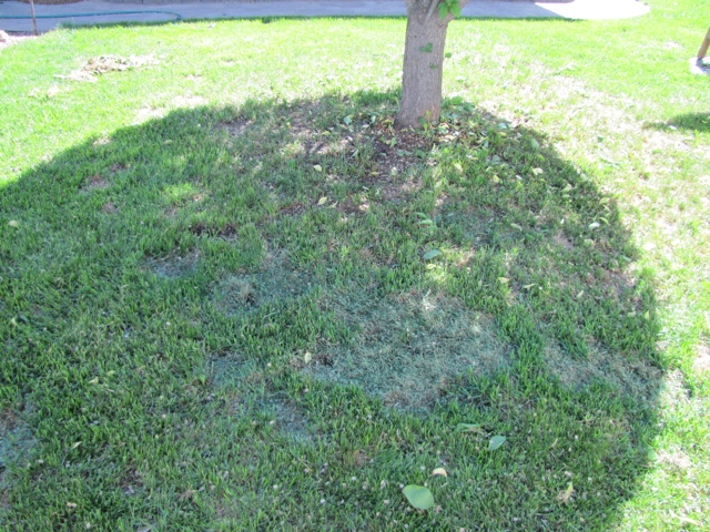 Product Review: LawnLift Grass Paint (6/6)