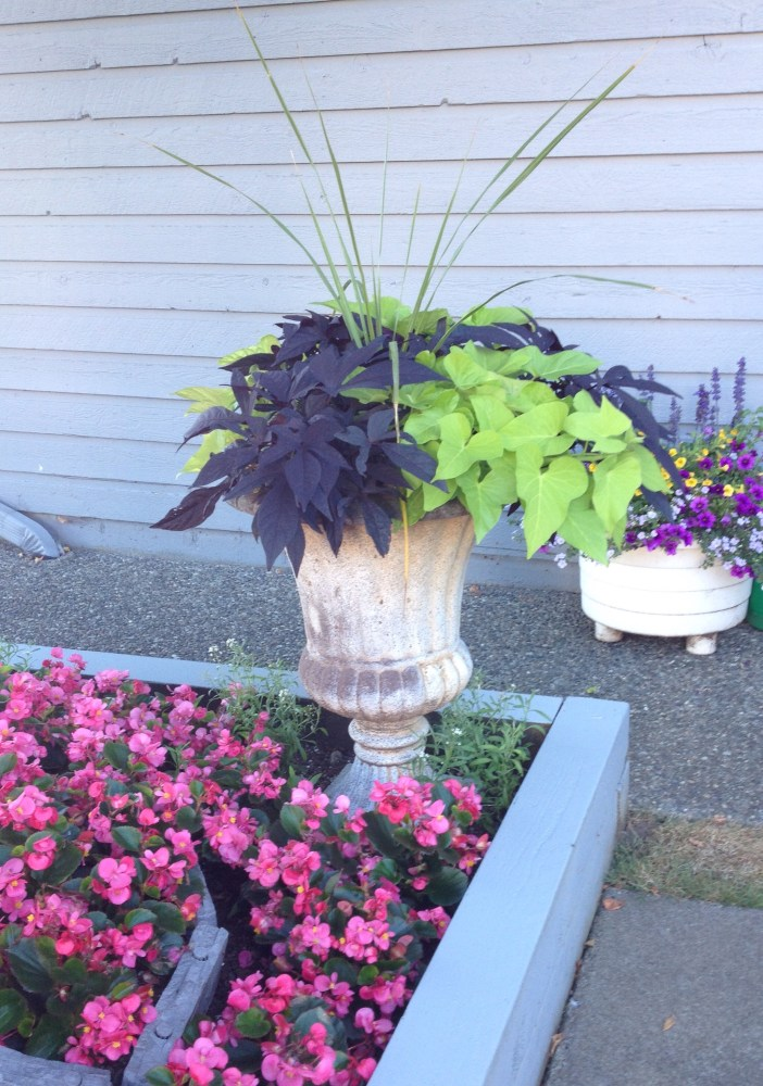 Thriller, Fillers and Spillers: The Formula for a Fabulous Planter (4/6)
