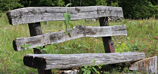 old-wood-bench-425645_960_720