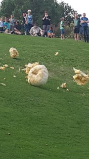 A smashing time at the Giant Pumpkin Carnival