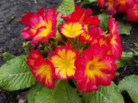 Bright spring colours