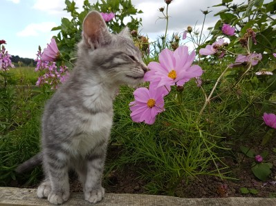 Oh I love pretty flowers