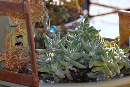 Fairy Garden, Just Outside the Front Door