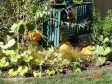 Ad hoc pumpkin patch September, 2005