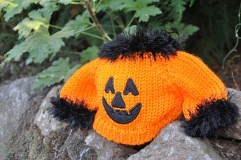 What all the well dressed pumpkins are wearing this fall.