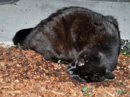 Diving in to the catnip
