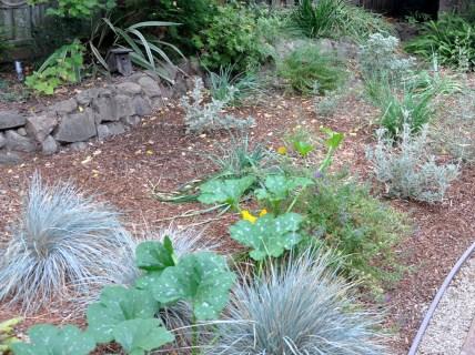 Pumpkin vines intermingle with the native plants