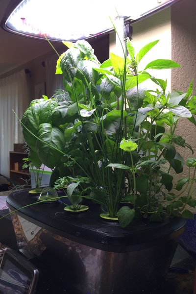 AeroGarden full plants