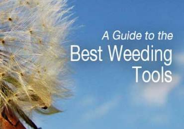 guide to best weeding tools