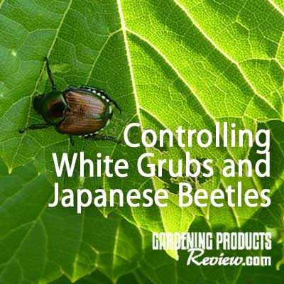 control japanese beetles & white grubs