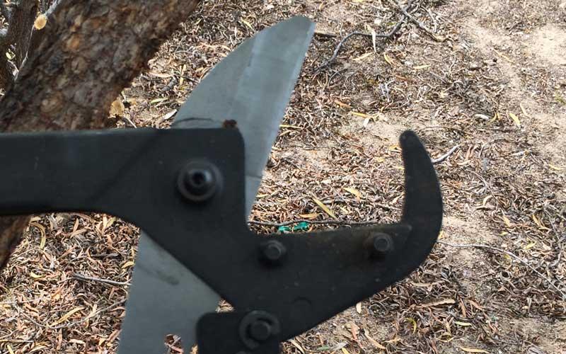 florian-maxi-lopper-hook-at-end-of-anvil