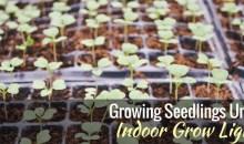 Growing Seedlings Under Indoor Grow Lights