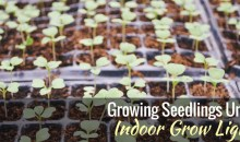 Growing Seedlings Under Indoor Grow Lights