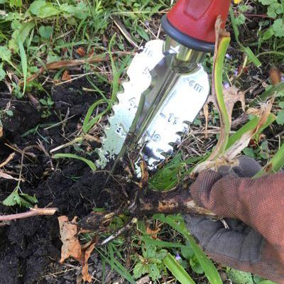 Garden Weasel digging up plant