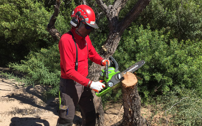 Greenworks Chainsaw cutting 4 inch branch