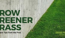 Lawn Care Tips from the Pros for a Healthy, Green Lawn