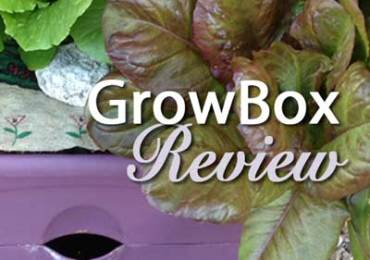 GrowBox review
