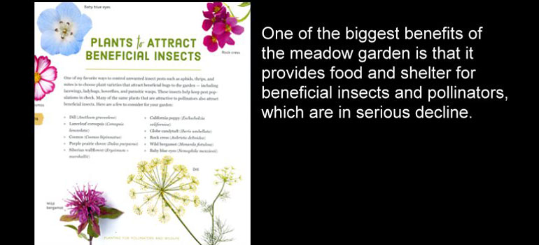 Mini-Meadows-beneficials
