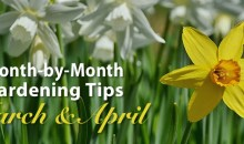 March & April Gardening Tips