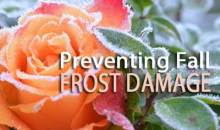 Preventing Fall Frost Damage in the Garden