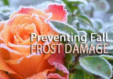 preventing fall frost damage