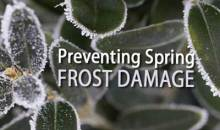 Preventing Spring Frost Damage in the Garden