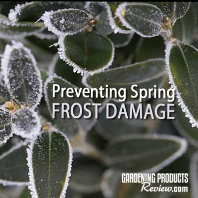 how to prevent frost damage