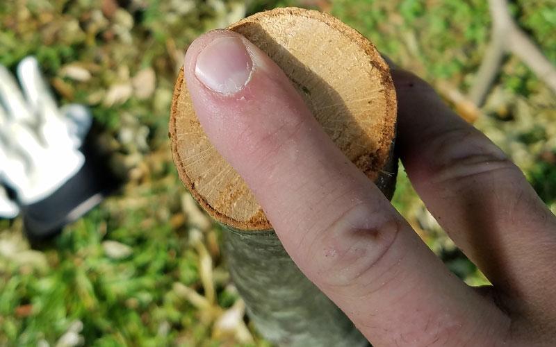 Troy-Bilt Chipper Shredder large diameter branches