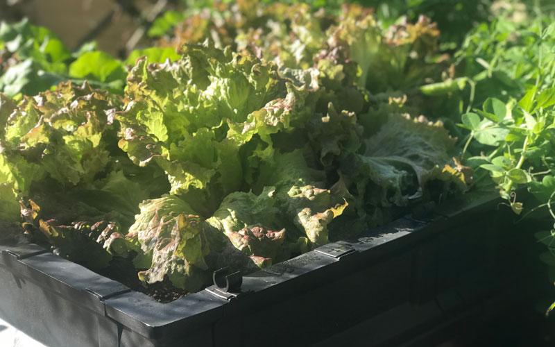 Vegepod full of vegetables