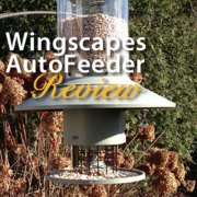 Wingscapes-AutoFeeder-featured