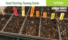 How to Successfully Start Seeds Indoors