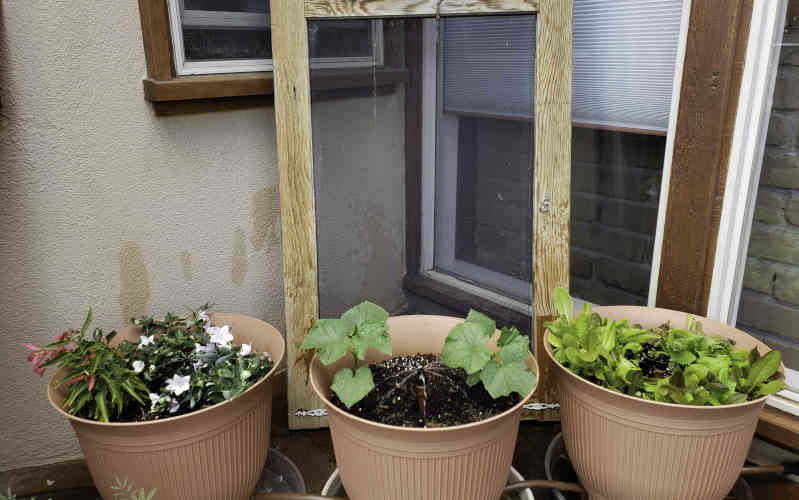 daisy rain sprinkler pots happy and healthy plants