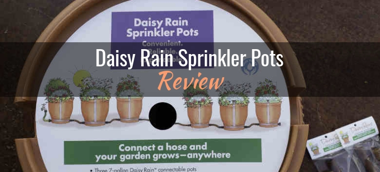 daisy-rain-sprinkler-pots-review-header