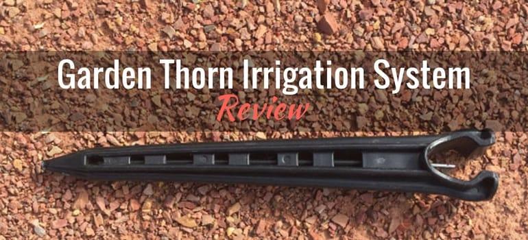 garden thorn featured image-1